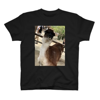 アルパカぱかぱか T-shirts