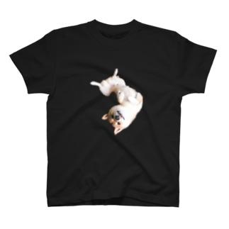 柴犬マサムネくん T-shirts