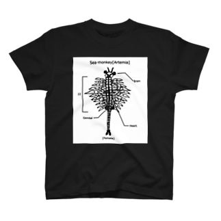 ご無沙汰してます!シーモンキー T-shirts