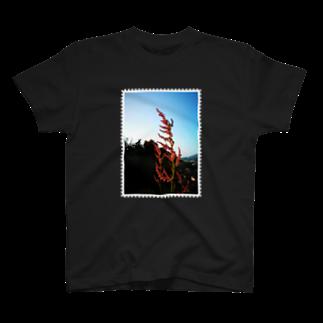 はんぐるぐるぐるの野草シリーズ 「スイバ」 T-shirts