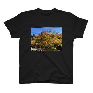 高野山の紅葉 T-shirts