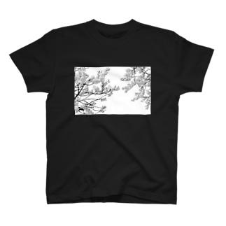 さくら満開 T-shirts