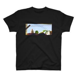 白文鳥のチマフミ T-shirts