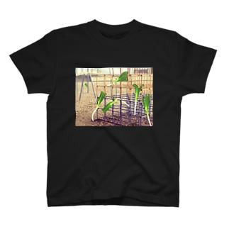 ジャングルジムネギ T-shirts