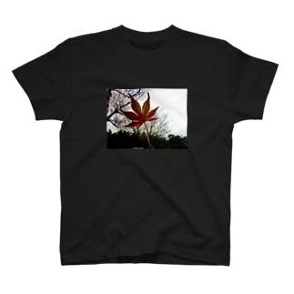 木立と紅葉 T-shirts