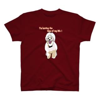 青春 Tシャツ