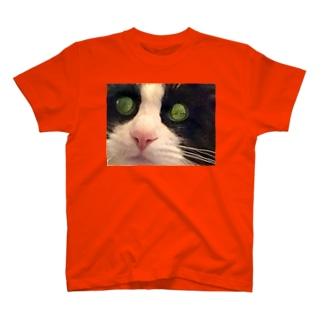 ねこじまんスーベニアⅡ(プレゼント用) T-shirts