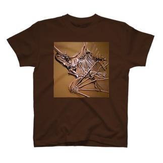 Aenigmatherium T-shirts