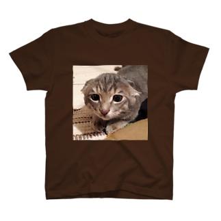 とらちゃぼんイカミミモドキ(コネコ) T-shirts