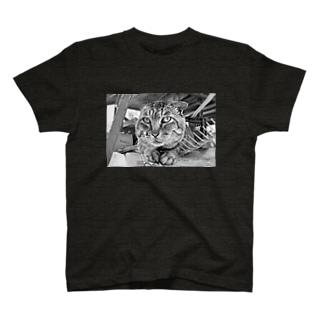 ボス猫さん T-shirts