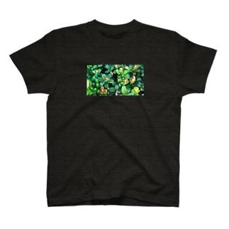 乗鞍岳の高山植物 T-shirts