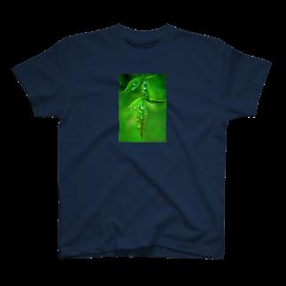 M.F.Photoの葉としずくTシャツ