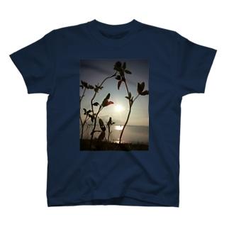 miumi T-shirts