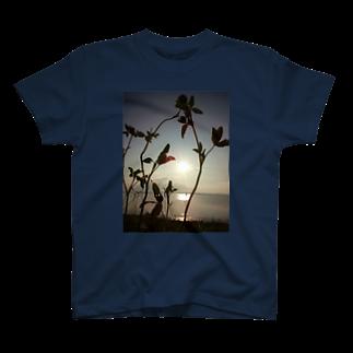 めりこのmiumi T-shirts