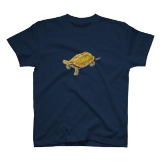 ここにいるよ、ニホンイシガメ T-shirts