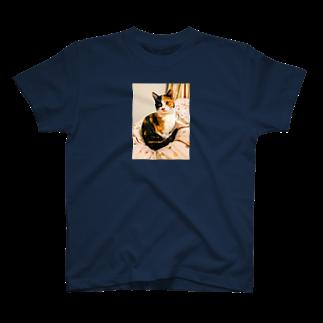 Hesseのまどろむ猫 T-shirts