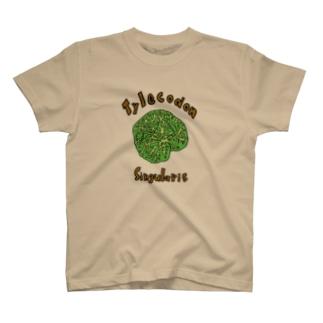チレコドン・シングラリスTシャツ T-shirts