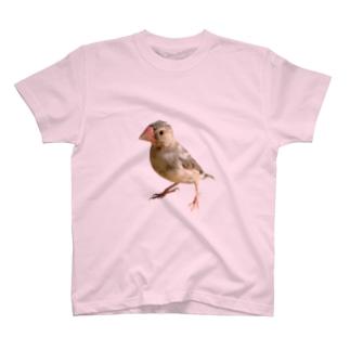 文鳥の雛 T-Shirt