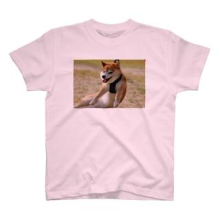 撤去 T-shirts