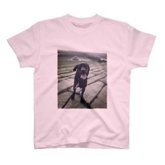 ✨ALO✨ T-shirts