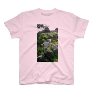 めぇー。 T-shirts