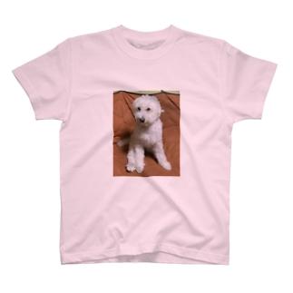 トイプードルのモン太 T-shirts