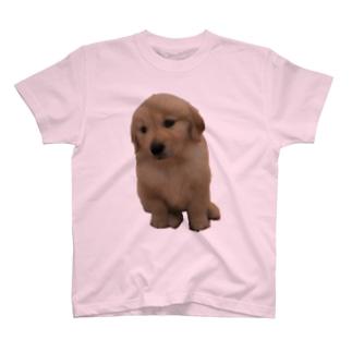 ちびももグッズ T-shirts
