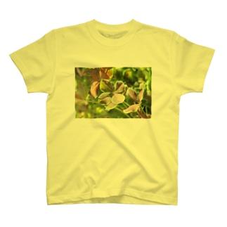 幸運のクローバー T-shirts
