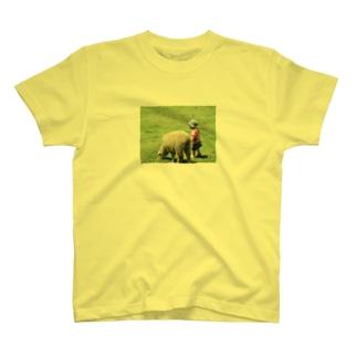 羊と私 T-shirts