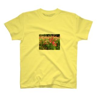 秋桜 Tシャツ