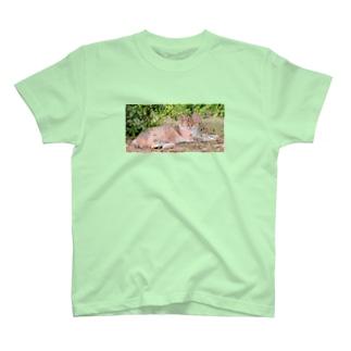 猫 T-shirts