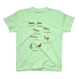 関東のカマキリ(背景透過ver) T-shirts