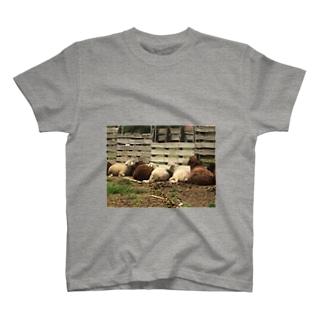 ヒツジ群T Tシャツ