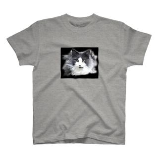 堕天使な長毛猫 T-shirts