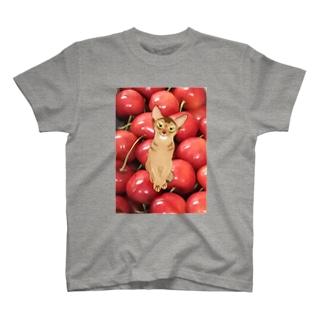 アビにゃんとサクランボ T-shirts