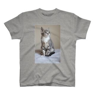 cat_20190306_0982 T-shirts
