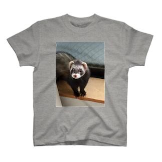 フェレット T-shirts