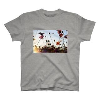 コスモス(夕焼け) T-shirts