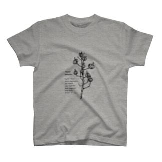 Alpinia  zerumbet T-shirts