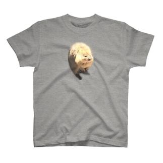幸せのクォッカ T-shirts
