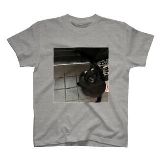 くーちゃん出たがり T-shirts