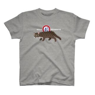 KEEP40 IRIOMOTE T-shirts