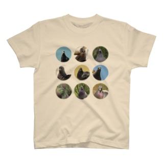 ハトがみてるよシリーズ Tシャツ