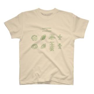 単子葉類と双子葉類 T-shirts