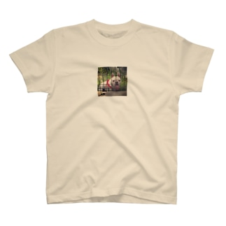 ぶるちゃん T-shirts