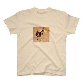 スーパーマン プッチ T-shirts