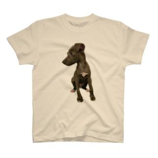 イタグレTシャツ T-shirts