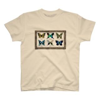 ガラス蝶標本 T-shirts
