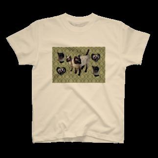 ちばっちょ【ち畳工房&猫ねこパラダイス】のタイ生まれのシャムニャンズ T-shirts