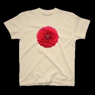 タカ彦の天竺牡丹 T-shirts